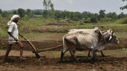 दिलासा!, नुकसानग्रस्त शेतकऱ्यांना राज्यपालांकडून मदतीची घोषणा