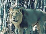 तेजस सिंह