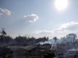 आगीनं धुमसतंय अॅमेझॉनचं जंगल