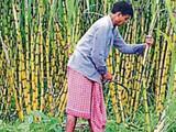 ऊस उत्पादक शेतकऱ्यासाठी गूड न्यूज
