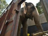 लक्ष्मी हत्तीण