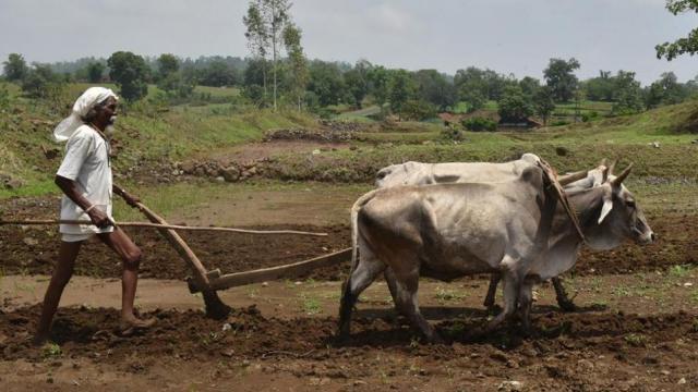 शेतकरी (संग्रहित छायाचित्र)