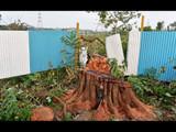 आरे कॉलनीतील २१४१ वृक्ष तोडले (Satyabrata Tripathy/HT Photo)