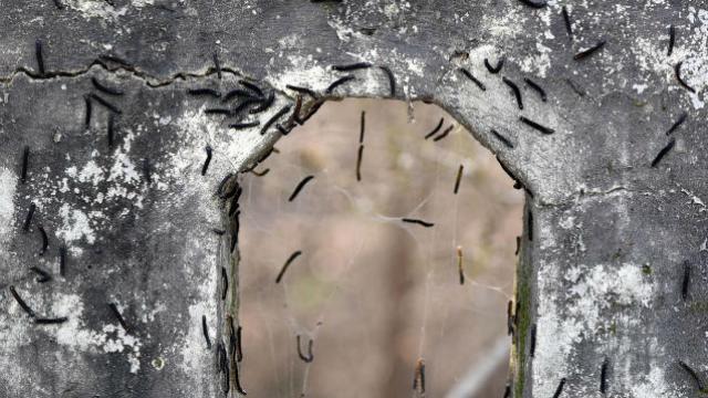 सीवूड परिसरामध्ये किड्यांचा उपद्रव