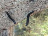 सीवूडमध्ये किड्यांचा उपद्रव