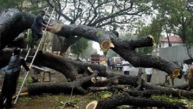 मेट्रो ३ च्या कारशेडसाठी आरे कॉलनीतील झाडे तोडण्यात आली.