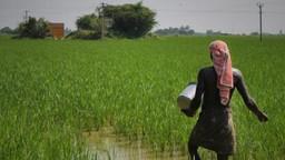 दिवाळीपूर्वी शेतकऱ्यांसाठी खूशखबर, रब्बी पिकांच्या हमीभावात वाढ