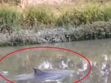 प्रदूषित पाण्यामुळे डॉल्फिनचा मृत्यू