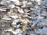 श्रीमंत देशांना त्यांचा कचरा मलेशियानं पाठवला परत