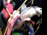 अत्यंत दुर्मिळ मासा गळाला लागला