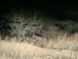 मोहोळ तालुक्यातील (जि.सोलापूर) कुरुल-सय्यद वरवडे हद्दीत देवीचा माळ परिसरात शनिवारपासून (दि.१५) बिबट्