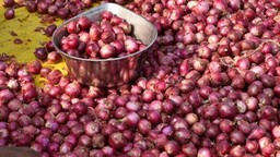 सरकारने घेतला कांदा निर्यातीवरील बंदी हटवण्याचा निर्णय