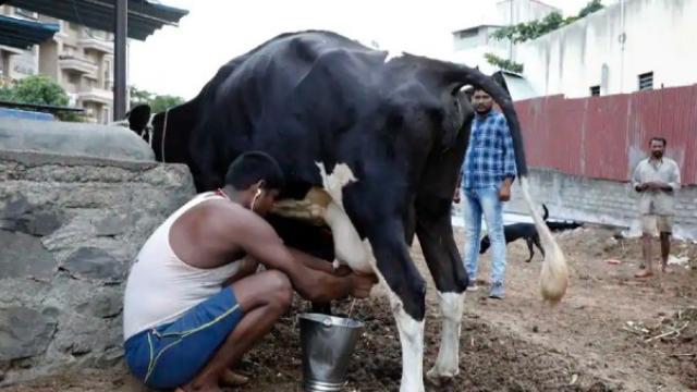 कोरोना प्रादुर्भावामुळे राज्यातील दूध व्यवसाय, दूध उत्पादक शेतकरी संकटात आहे.